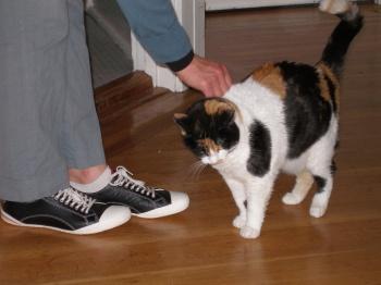 Nikita (and Kat's new shoes)